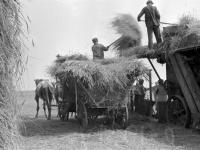 Колхозники одного из колхозов немцев Поволжья во время молотьбы зерновых нового урожая