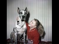 Юная актриса Лена Проклова с собакой.  г. Москва. 1966 – 1968 гг.  Арх. № 1-4982 цв