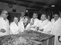 Члены греческой делегации осматривают сорта табака в щипальном цехе фабрики им. М.С. Урицкого  Ленинград. 25 августа 1956 г.  Фотограф В. Цин  РГАКФД. Арх. № 0-243889