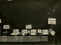 Паек в марте 1921. Галлиполи. Османская империя. РГАКФД